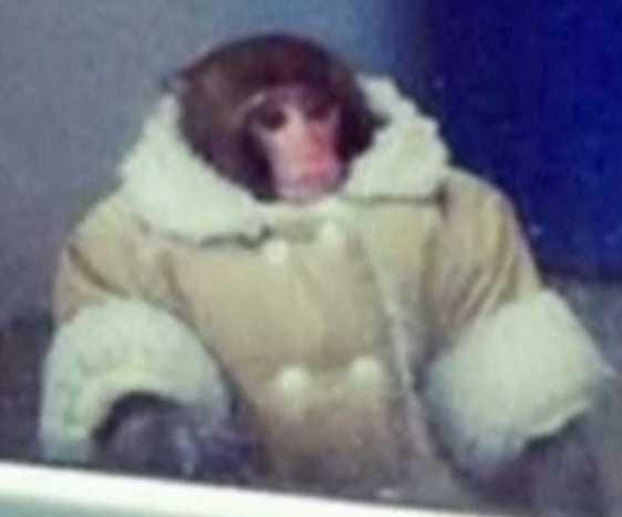 Bilden på apan spreds över hela världen.