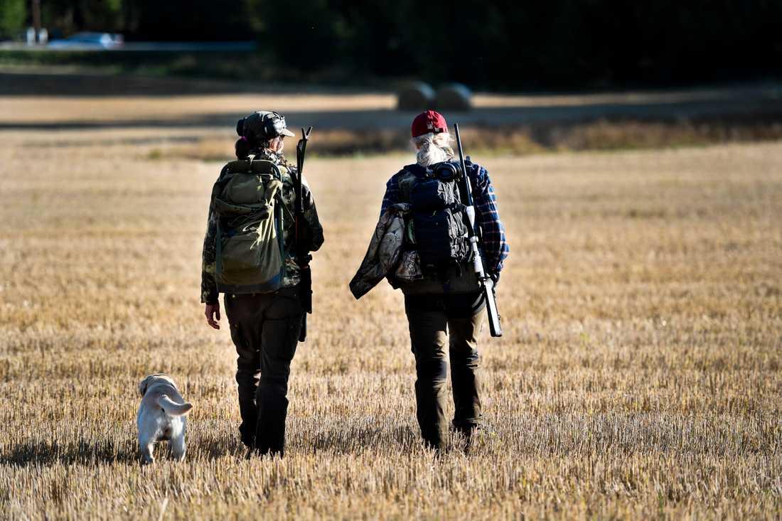 Det finns närmare 300000 registrerade jägare i Sverige. Arkivbild.
