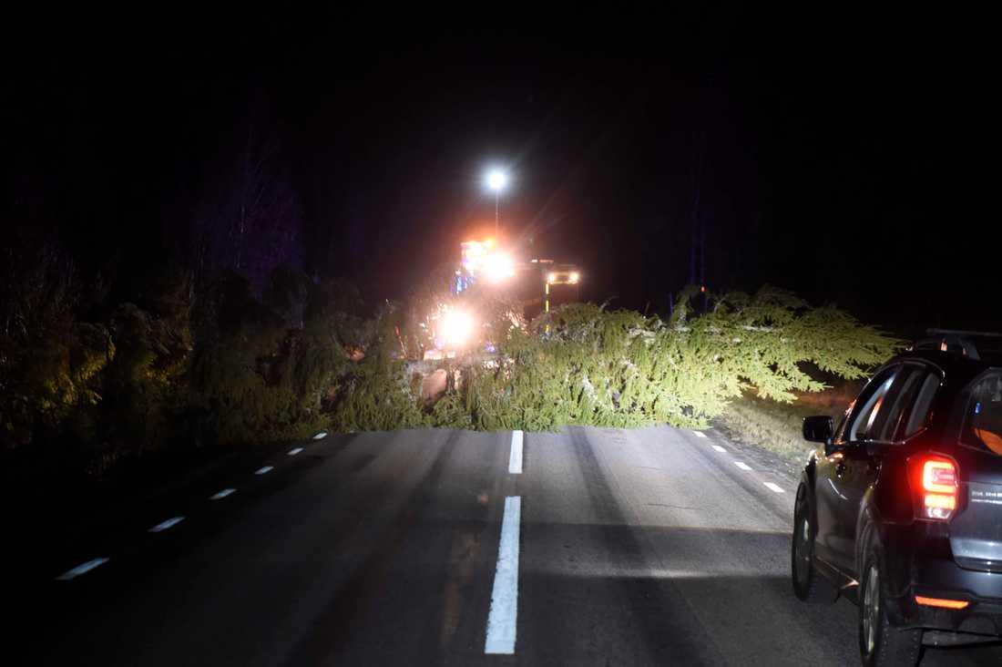 Ett träd blockerar vägbanan i Svenljunga.