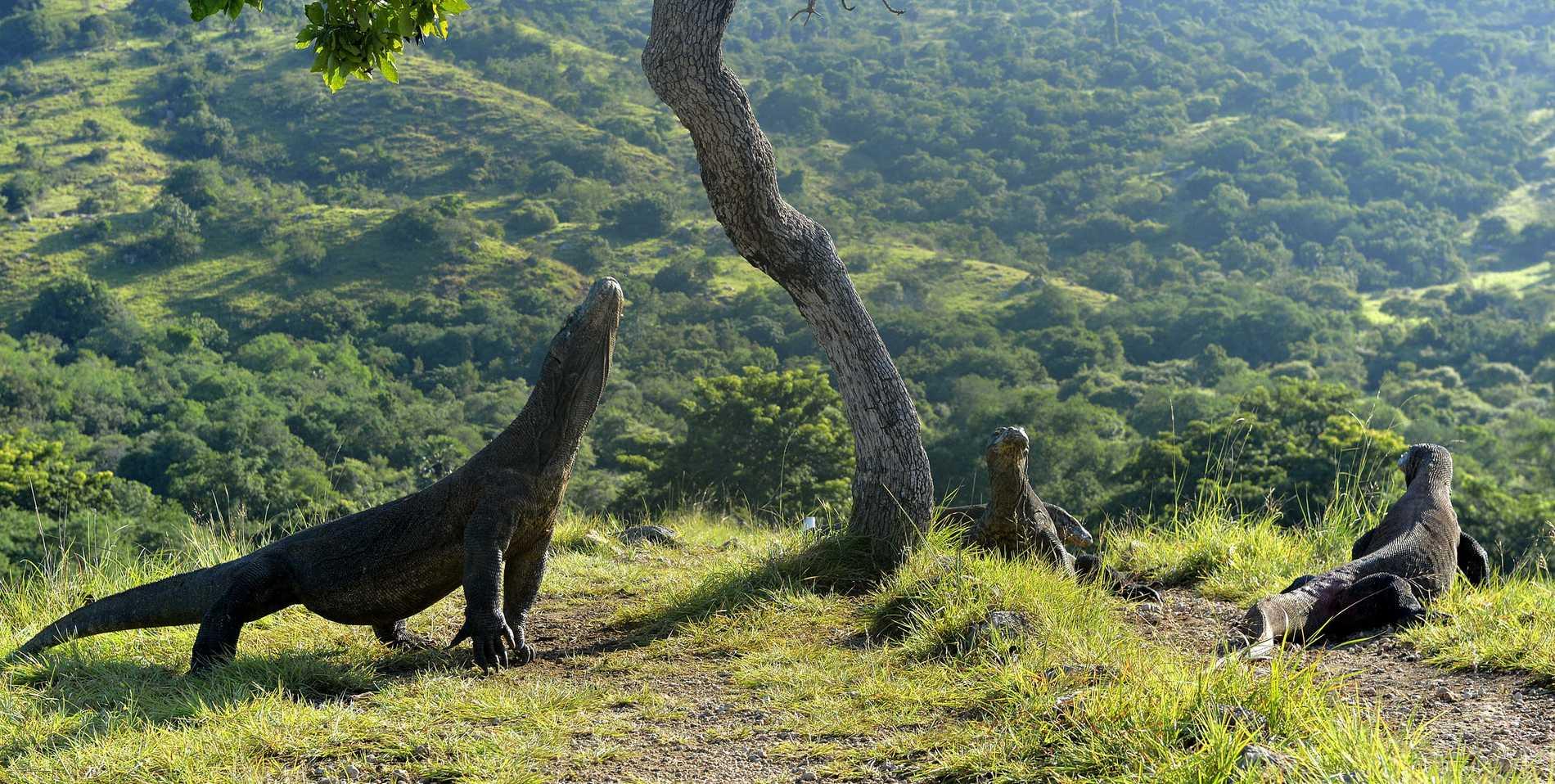 Komodo Island är full av drakliknande varaner.