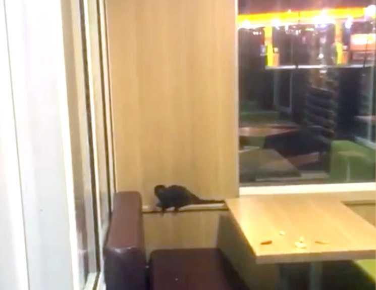 Apan på besök hos McDonalds i Frölunda, Göteborg.