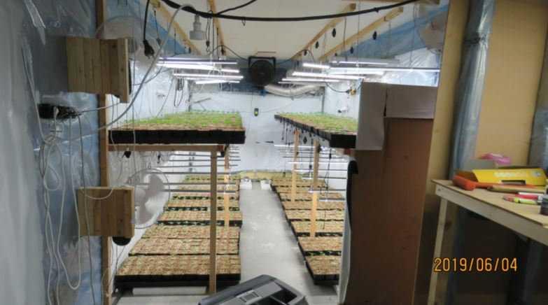 I en intilliggande byggnad drog man fram sticklingar innan plantorna flyttades över till själva ladugårdsbyggnaden.