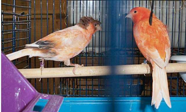 En 24-årig man döms till fängelse i tre år för att ha stulit över 100 fåglar från en man – som han dessutom enligt domen bundit fast och hotat med vapen i samband med den grova stölden