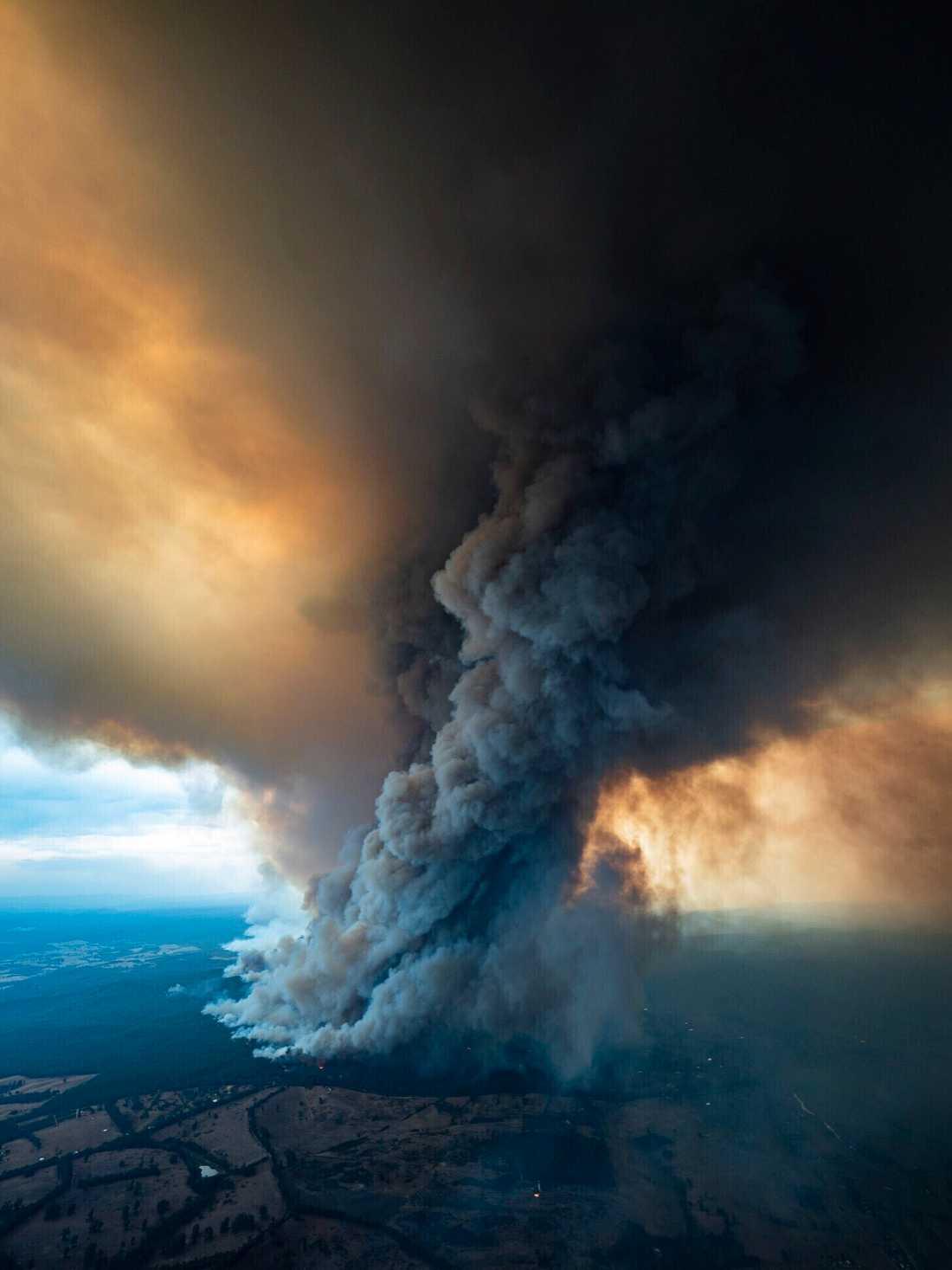 En tjock rökpelare från skogsbränderna i East Gippsland, Victoria.