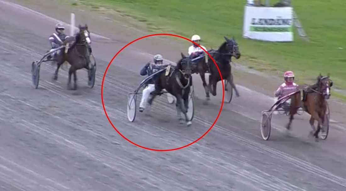 Conrad Lugauer får plocka upp sin häst och försöker hålla balansen i sulkyn.
