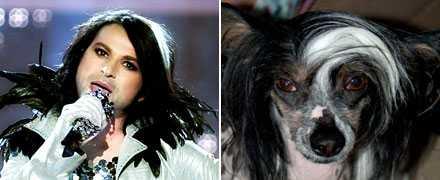 Svart och vitt Hur mycket nakenhund har Ola i sig?