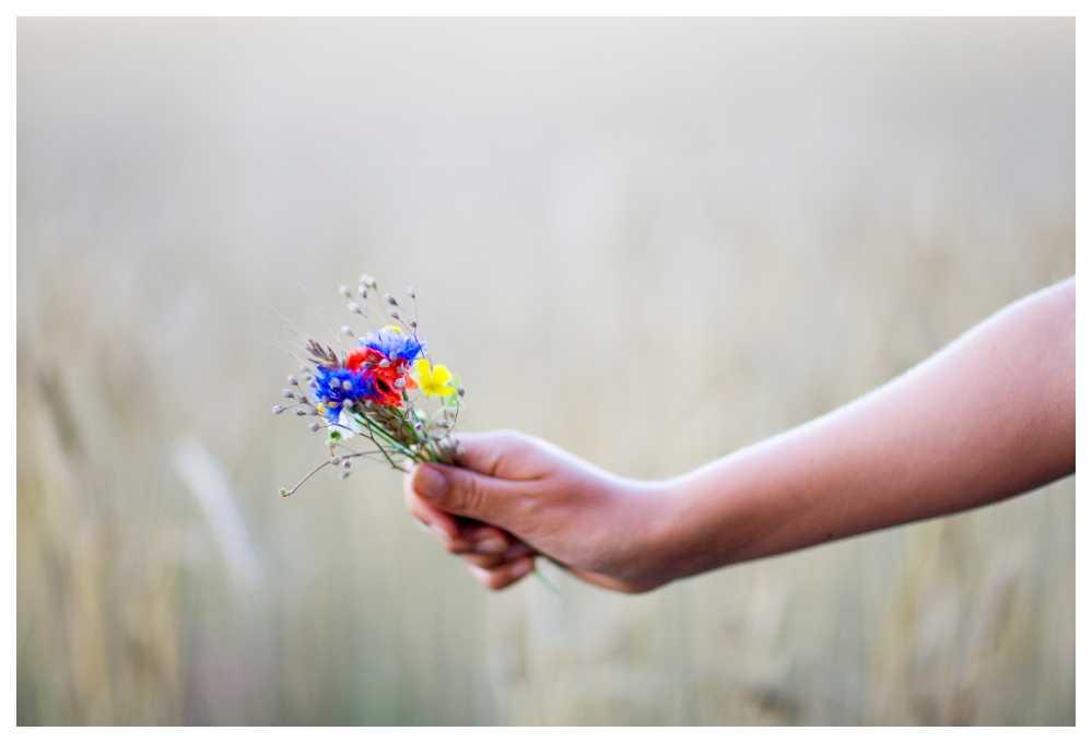 Att lägga sju olika blommor under kudden på midsommarnatten kan bli spännande.
