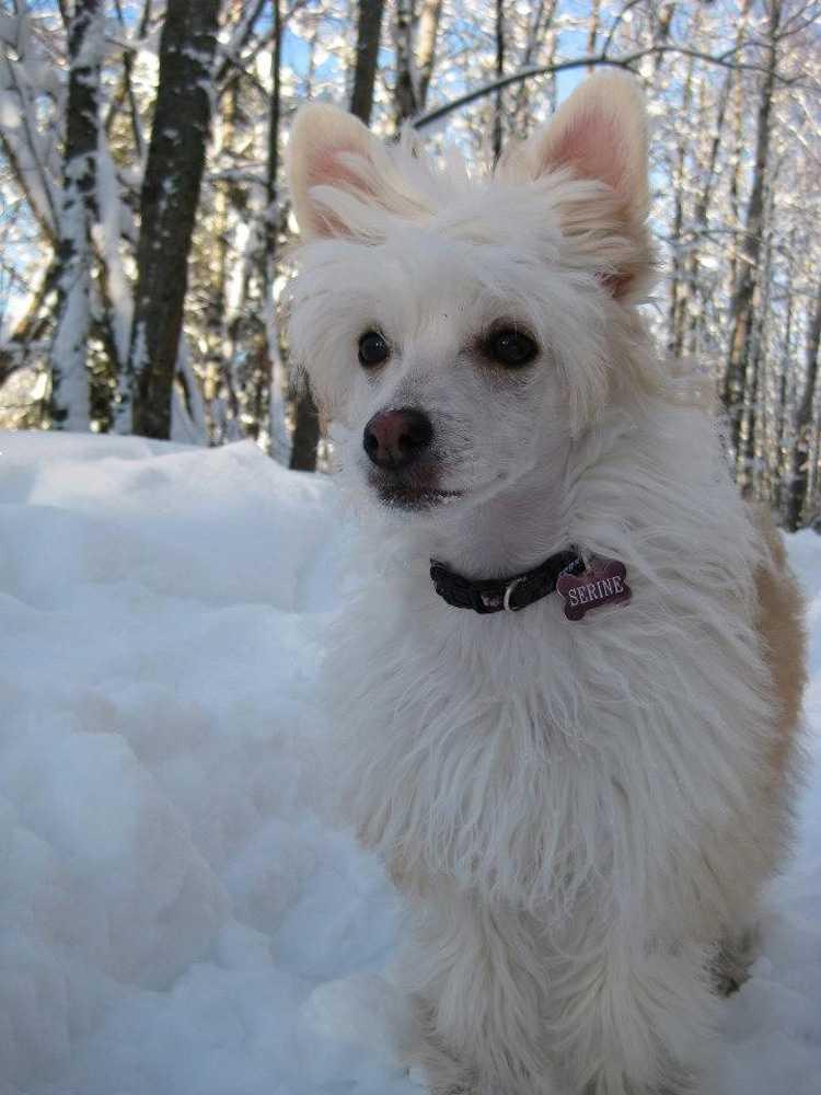 Serine var en snäll, social och aktiv hund före olyckan, enligt ägaren Marit Bangsund.