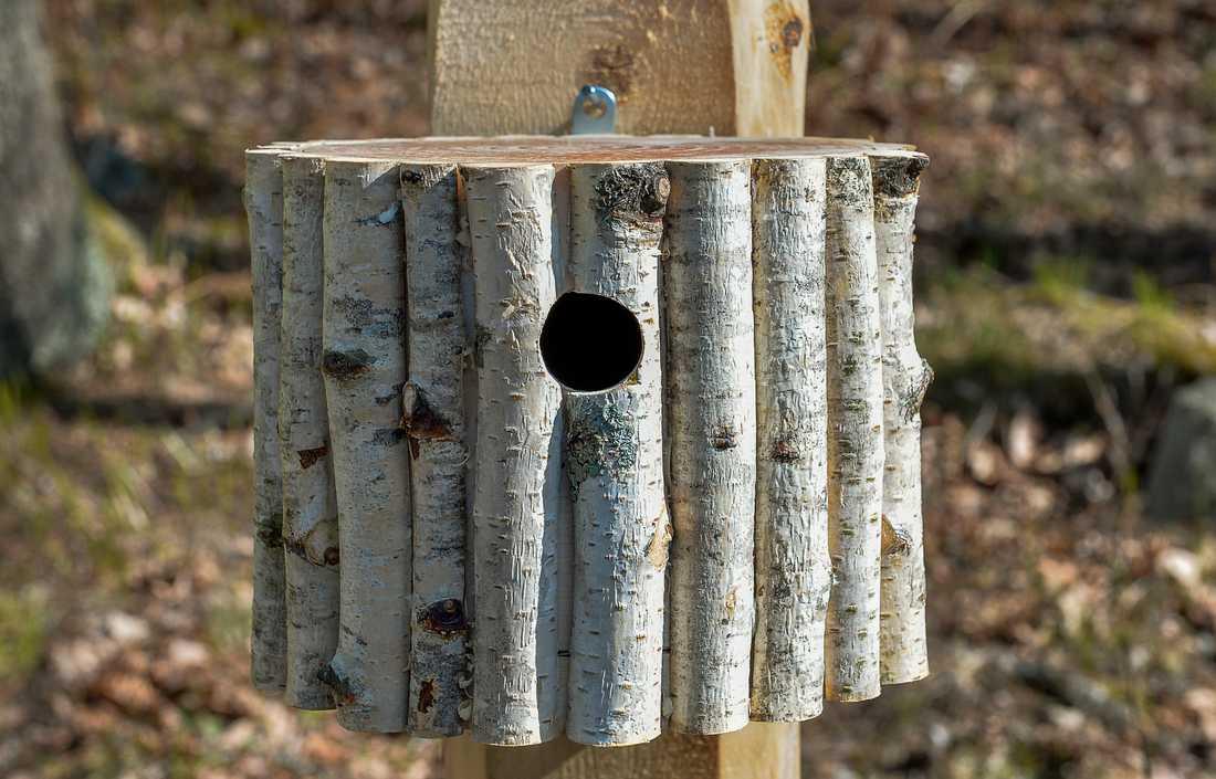 Att sätta upp fågelholkar har blivit en vanligare hållbarhetsåtgärd bland Riksbyggens bostadsrättsföreningar. Arkivbild.