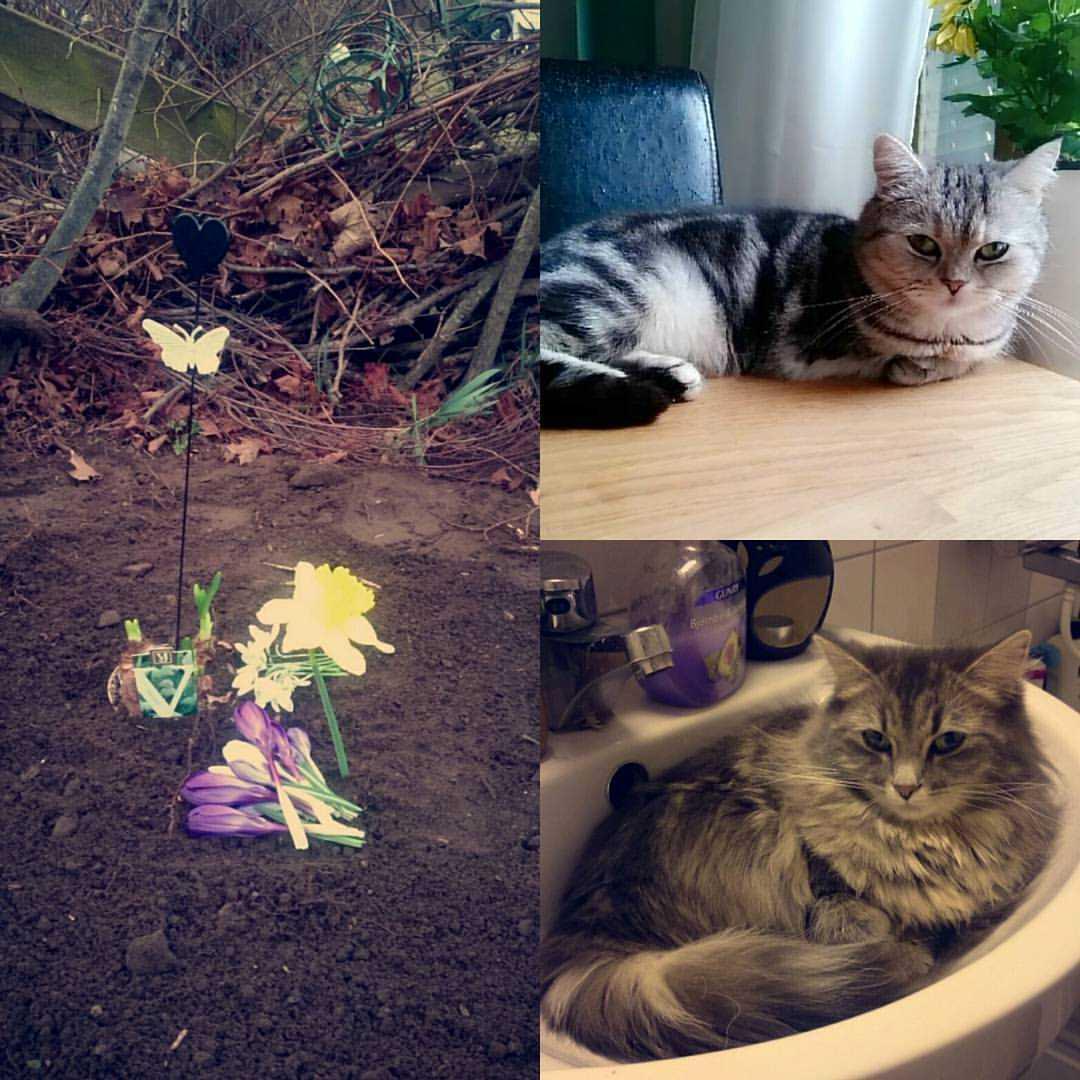 I branden dog tyvärr hennes katter som hon nu har begravt.