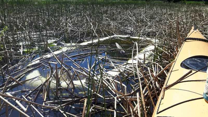 Jollen bogserade Mats i land.