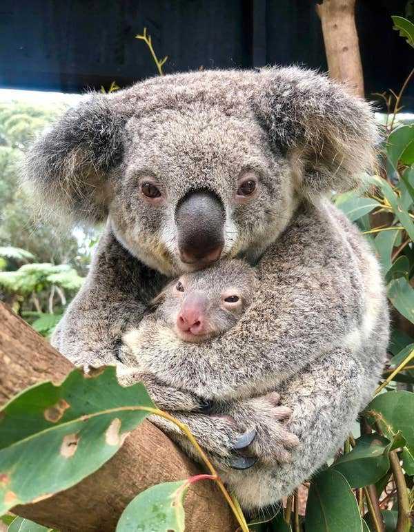 Mamma Rosie håller hårt i sin nyfödda bebis.