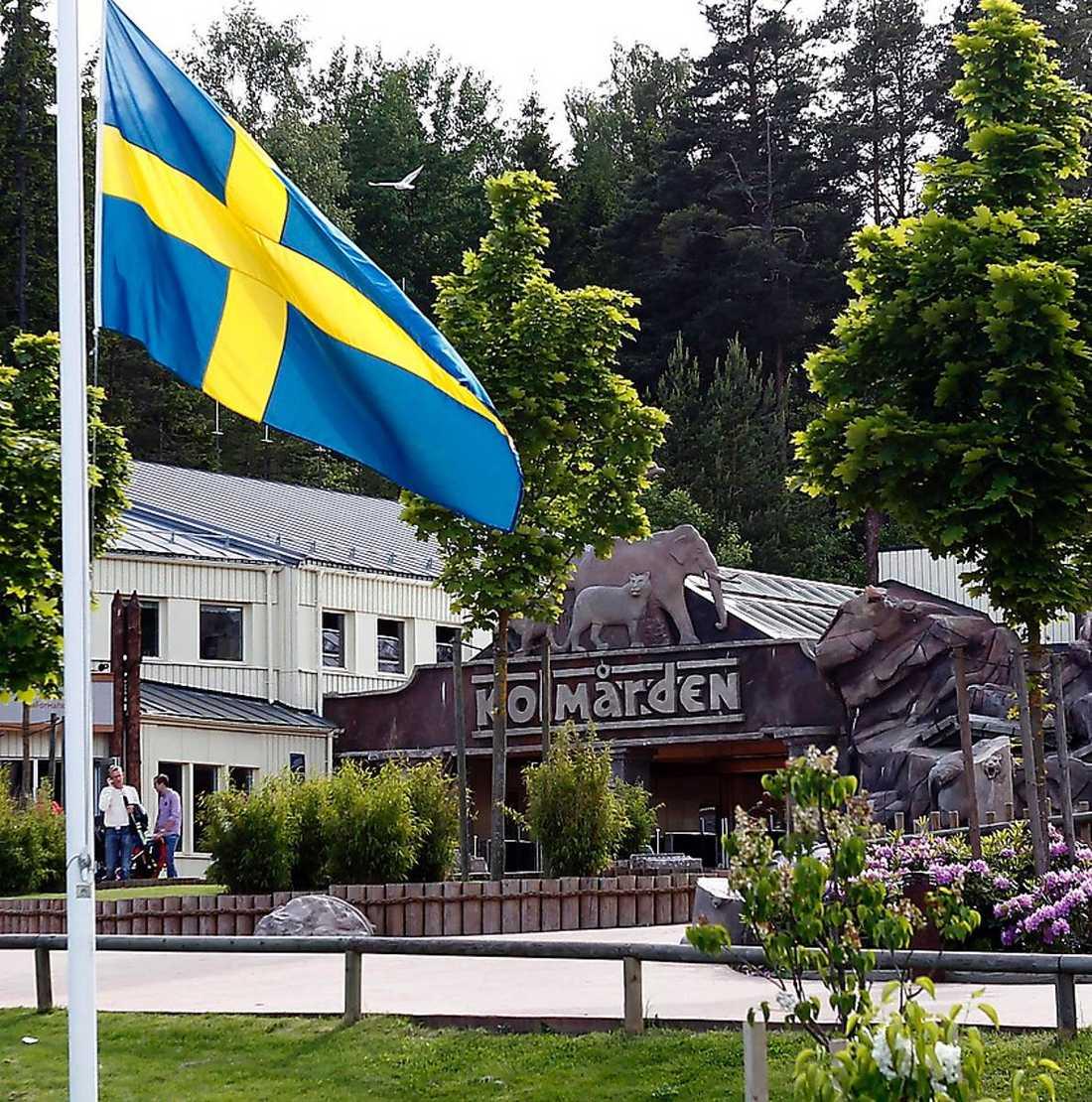 Flaggan på halv stång Djurparken var i sorg efter dödsattacken i juni.
