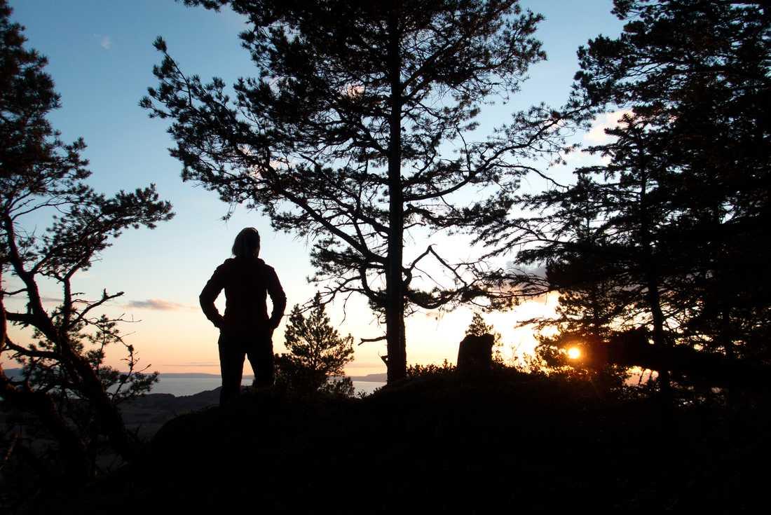 Är skogen svenskens religion? Arkivbild.