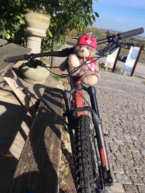 Bo-Boo på en cykeltur i Nederländerna.