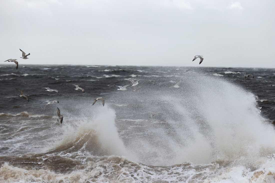 SMHI har utfärdat varningar för starka vindar och det blir blåsigt de närmaste dagarna.