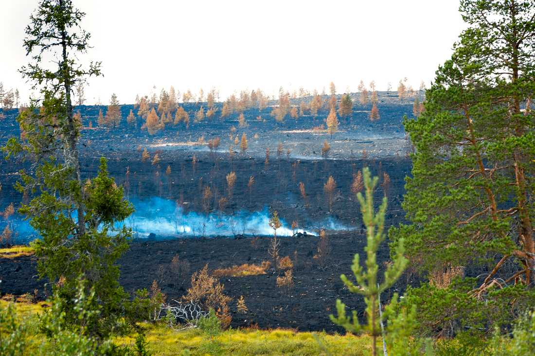 Brandhärjade Älvdalens skjutfält vid Trängslet.