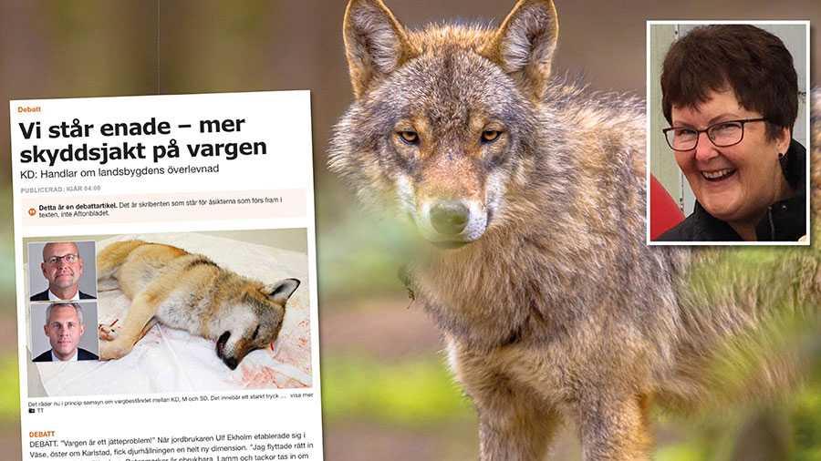 En majoritet av befolkningen i varglänen vill ha lika många eller fler vargar. Det är fakta som våra folkvalda ska ta hänsyn till, inte utgöra megafoner för Svenska jägareförbundet, skriver Eva Ångström.