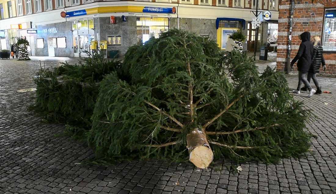 Slutet för den stora granen på Södergatan i höjd med Skomakaregatan inför julen 2016.