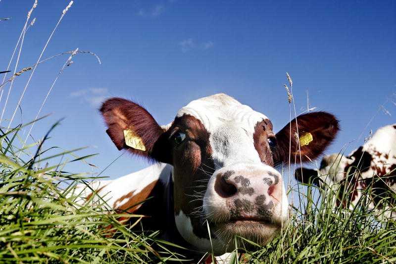 Vi behöver ett hållbart jordbruk som inte är inriktat på subventioner till djurindustrin, skriver debattörerna.