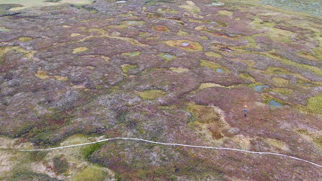 Vissátvuopmi är Sveriges största sammanhängande palsmyr. Här syns palsarna som gråbruna upphöjningar, samt några termokarstsjöar som bildas där palsar är på väg att försvinna.