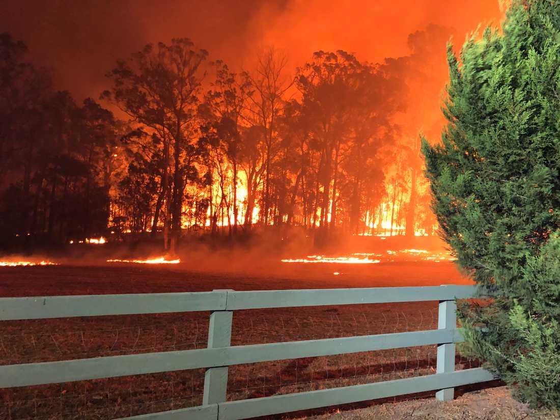 Omkring 2000 brandmän och frivilliga kämpar mot fler än 100 bränder i New South Wales.