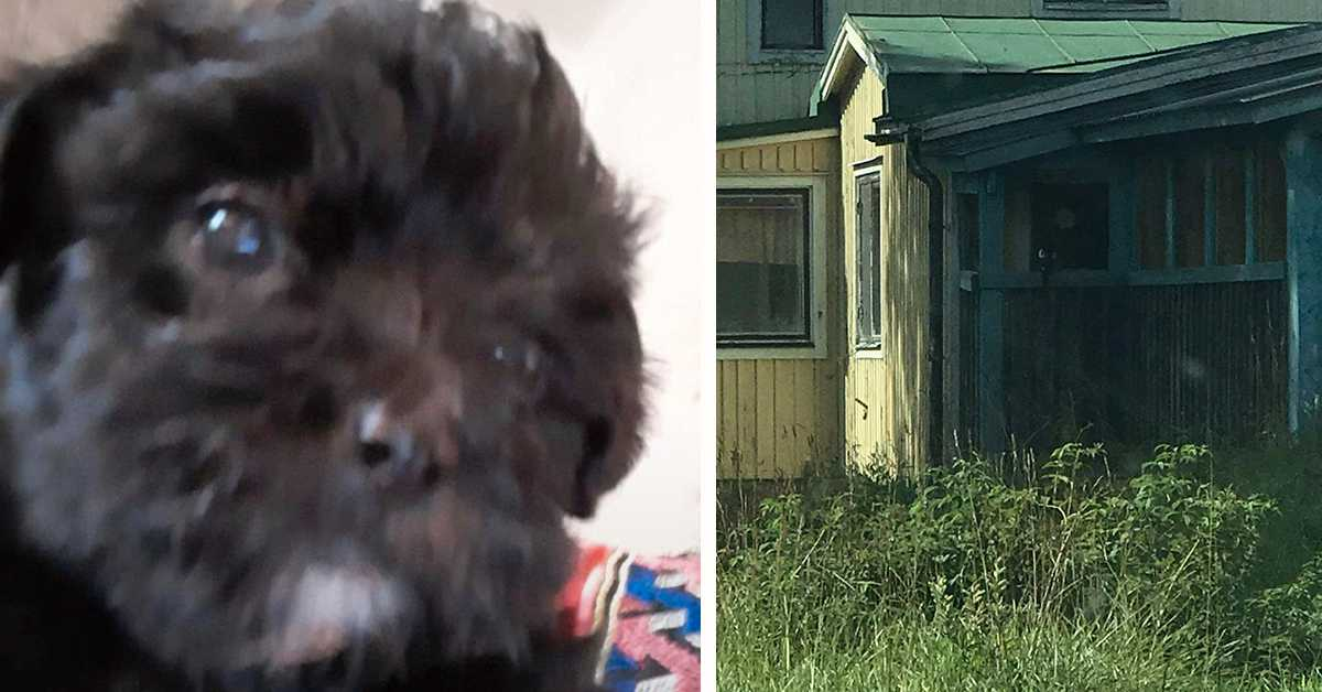 Skulle köpa hund – hittade bara ett ödehus