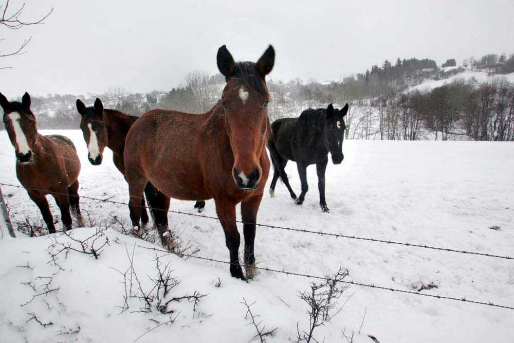 På många av landets större hästkliniker, distriktsveterinärer och länsveterinärer fylls inte hästarnas pass i ordentligt.