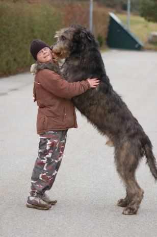 Castor är en irländsk varghund på imponerade 92 centimeter.