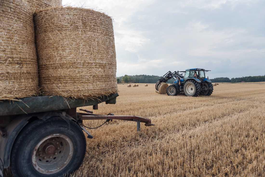 I dag delar närmare 60000 svenska lantbrukare på nästan 10 miljarder kronor EU-medel per år. Arkivbild.