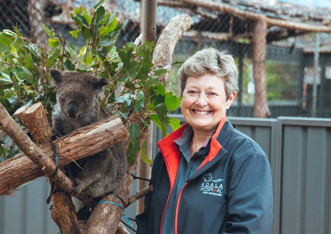 Sue Ashton leder Koala Hospital i Port Macquarie i New South Wales.