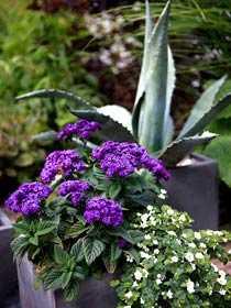 Krukor Att plantera i krukor kan vara bra i den lilla trädgården – mer får plats på liten yta och det är lätt att förändra trädgårdens profil.