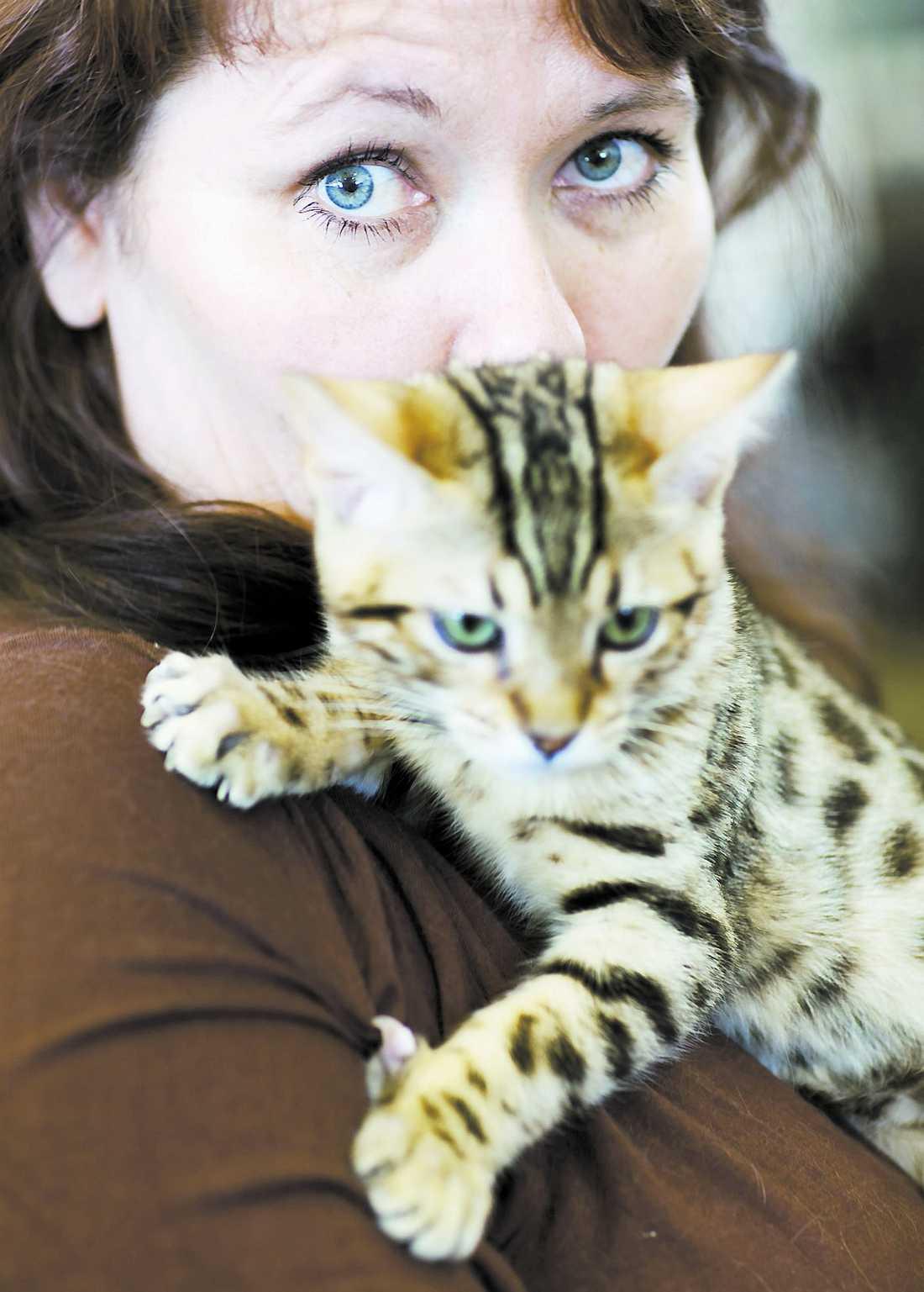 """Ett kattJobb Ulrika Granlid har totalt tio bengaler hemma. """"Det är ett heltidsjobb, säger hon."""