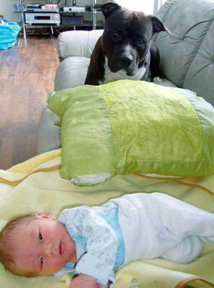 gillar husse Hunden Majlo ligger och tittar på lillhusse Kasper.
