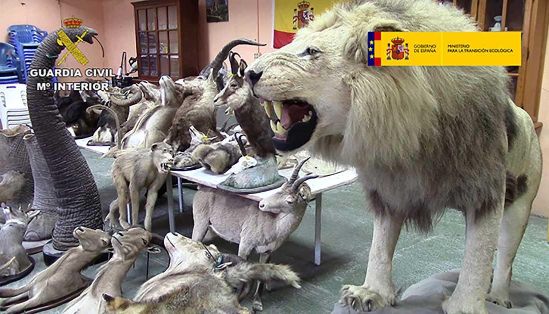 Spansk polis har avslöjat en liga som handlar med utrotningshotade uppstoppade djur på nätet.