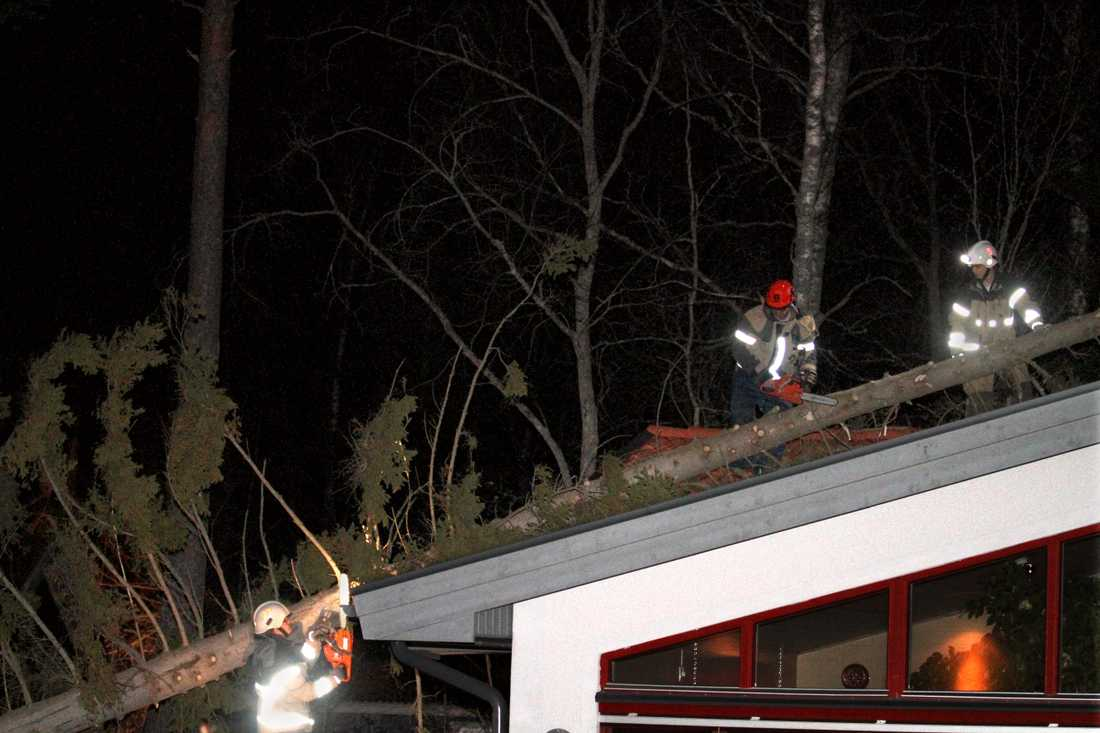 Ett träd som blåst ned över ett bostadshus.