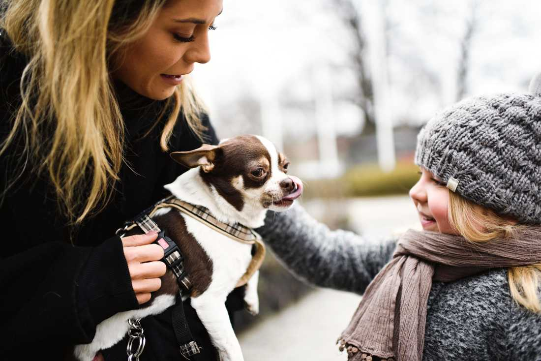 Bianca hade med sig hundarna under mötet.