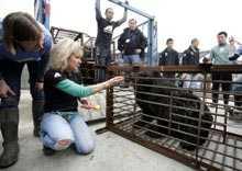 Anställda på räddningscentret tar en titt på de nyanlända björnarna.