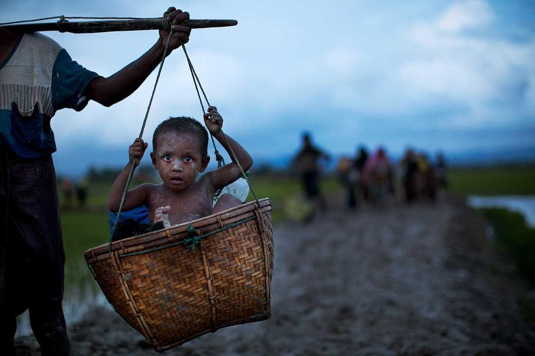 Rohingyas korsar risfält för att försöka ta sig över till Bangladesh.