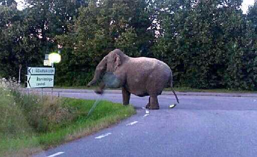 Mårten Oretorp i Linköping trodde inte sina ögon när han såg elefanten – som plötsligt började jaga honom.