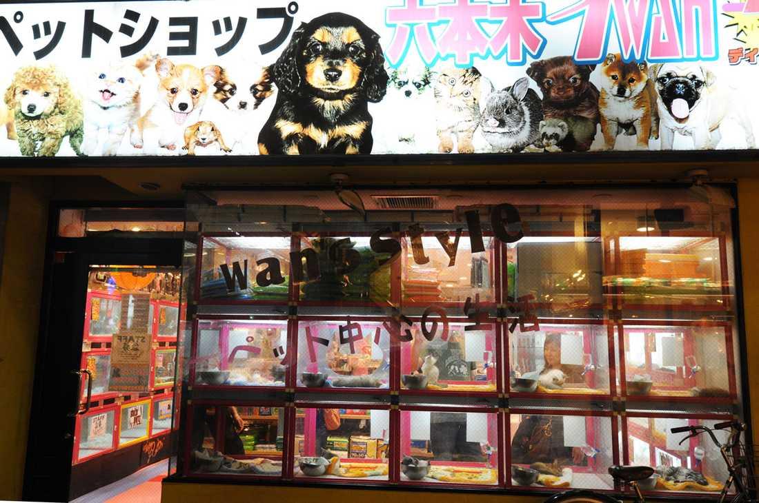 Bakom massavlivningarna ligger en explosion på den lukrativa japanska husdjursmarknaden.