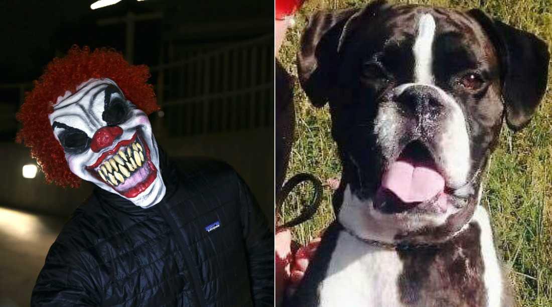 Marie blev överraskad av två clowner när hon var ute och gick på promenad. De båda betedde sig hotfullt och Ollie bet en av dem.