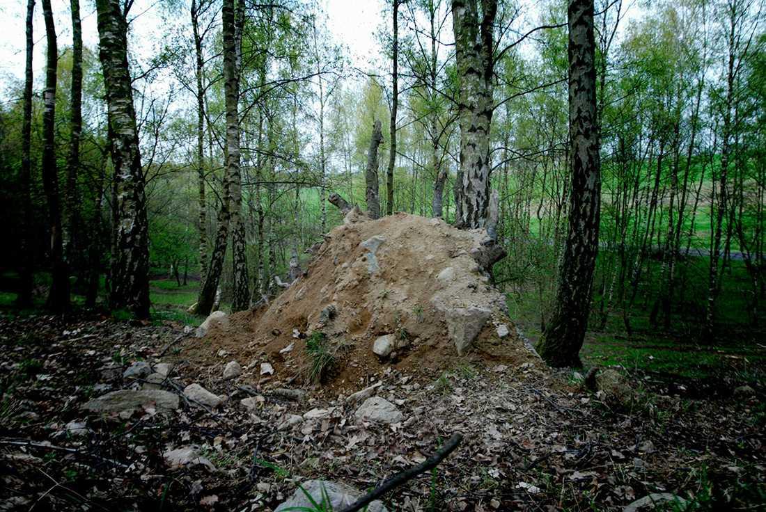 Hösten 2003 gjorde svampplockare ett fasansfullt fynd i  Torup i Skåne – ett kranium i en svart sopsäck.