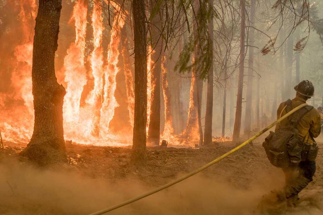 Skogsbrand nära Yosemite nationalpark.