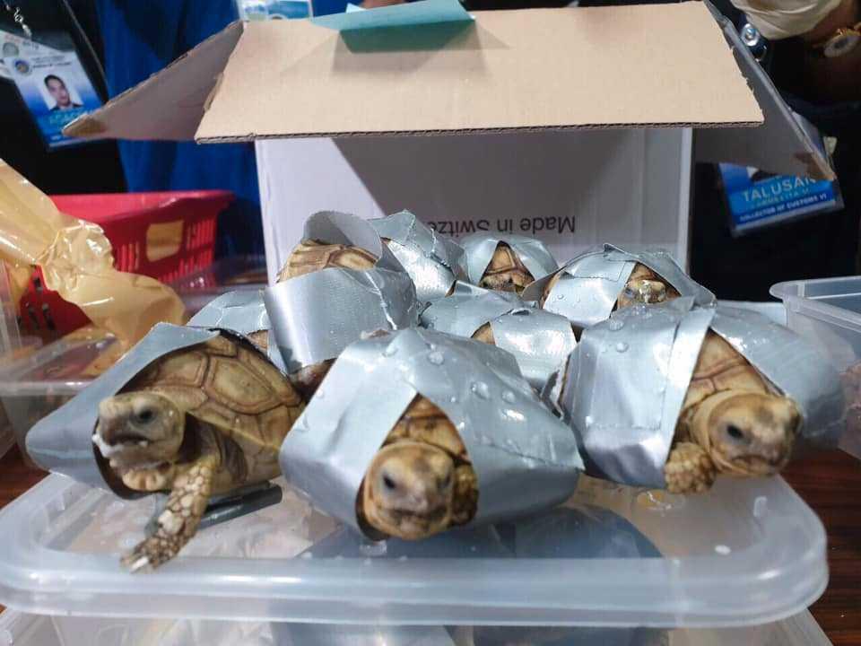 Väskorna med sköldpaddorna hämtades aldrig av smugglaren.