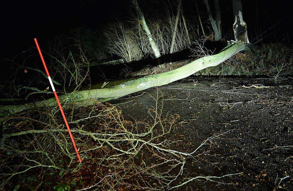 Ett träd blockerar vägen till Snapparp utanför Laholm natten till måndagen.