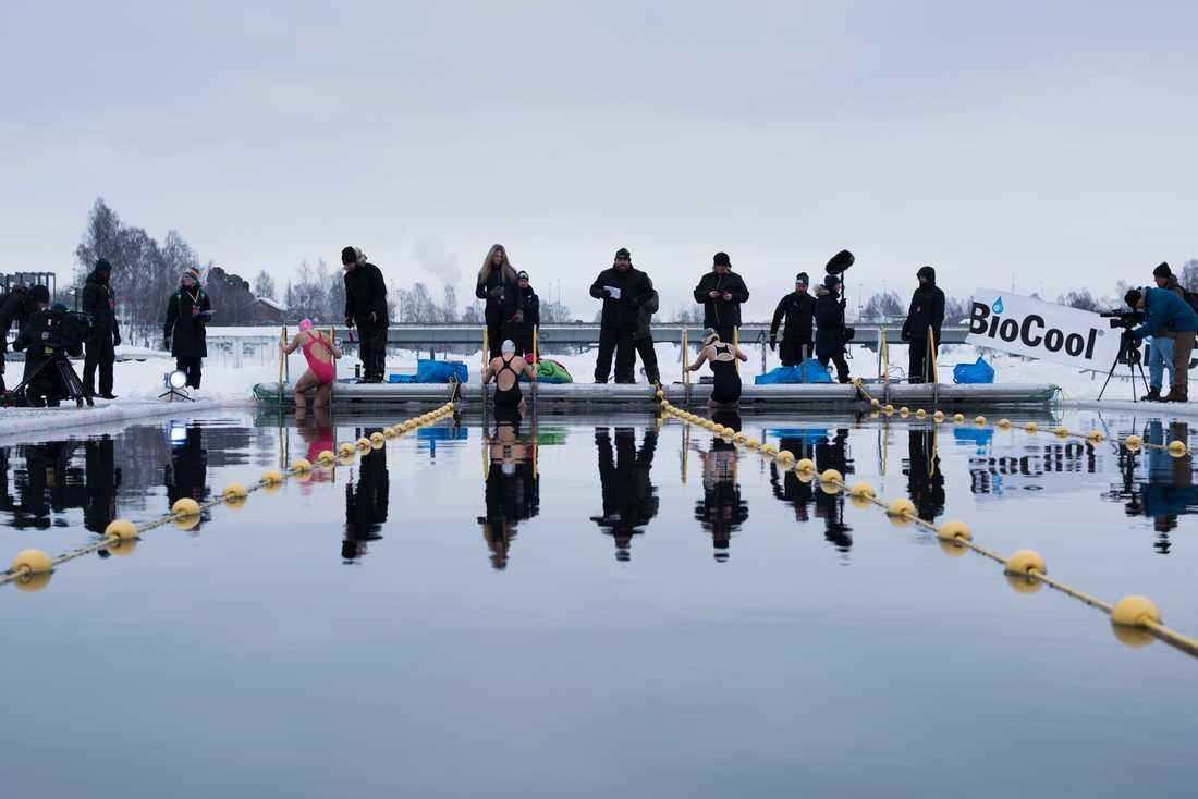 Fyra deltagare kliver ner i vattnet inför en start i skandinaviska mästerskapen i vintersim i Skellefteå.