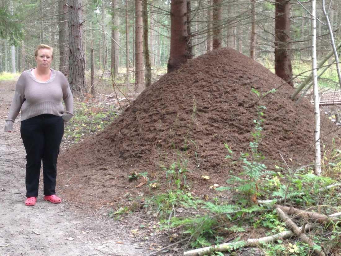 Myrstack i skogen på Ljusterö.