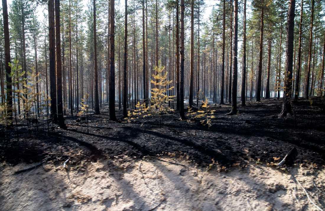 Skogsbrand i trakterna kring Ljusdal.
