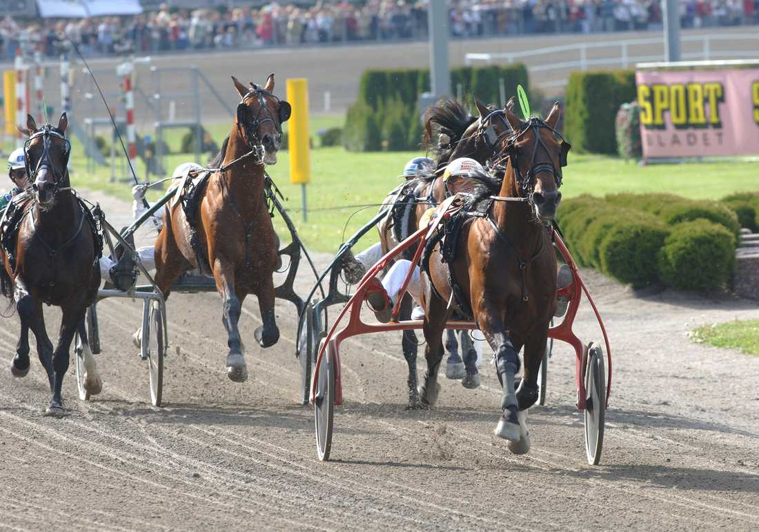 Steinlager vann Elitloppet 2005. Nu är hästen invald i Hall of Fame.